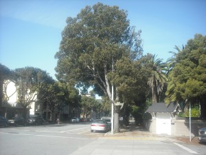 The Lake Street bike path, halfway between Land's End and its start (at Arguello & Lake in the Inner Richmond)
