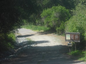 Near the trailhead for the Rifle Range Road entrance to Wildcat Canyon Park.