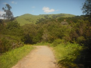 On the trail in Wildcat Canyon Park, near the entrance on Rifle Range Road.