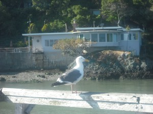 Park visitor perched on the pier, with beachside home in the background.