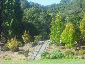 Stairs in the park, near the picnic area.