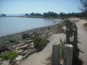 One of many bayside views at Candlestick Point.