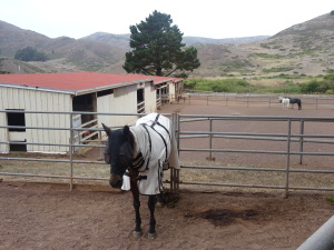 Unhappy-looking horse in stables that you pass on the trail.