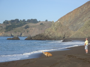 Dogs like Black Sands Beach even more than people do.