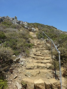 Steep stairs leading up to the highest point on the Coastal Trail.