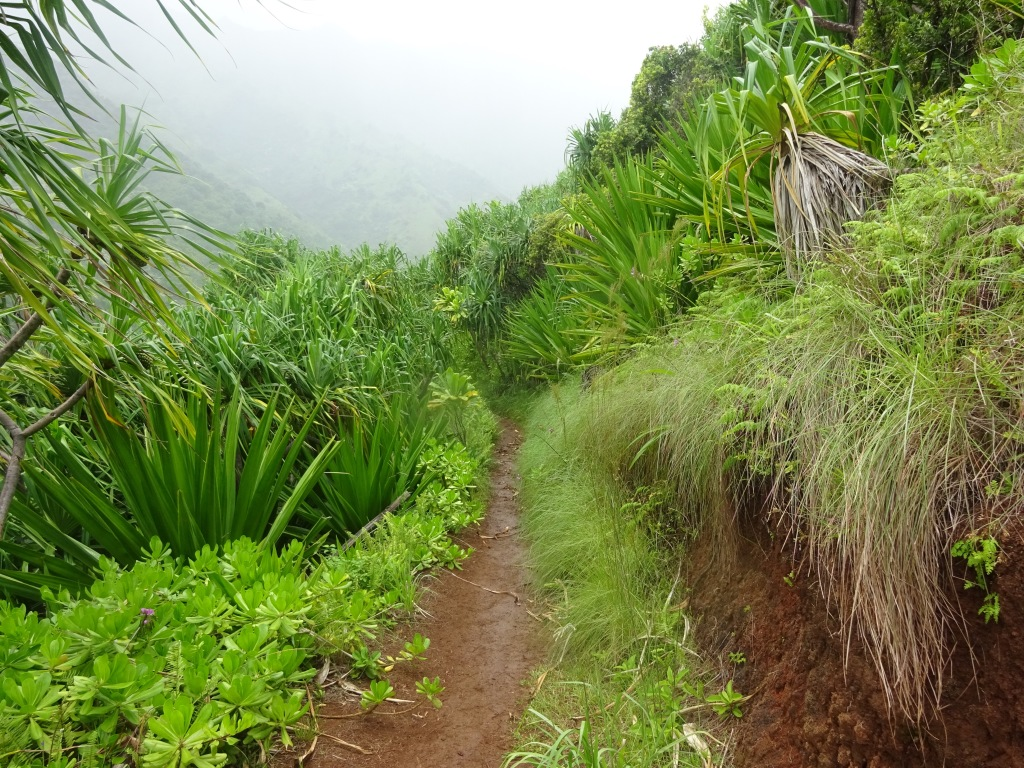 Much of the trail cuts a narrow path through jungle-like terrain.